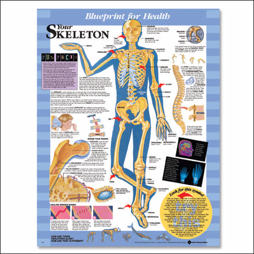 YOUR SKELETON UNMOUNTED CHART