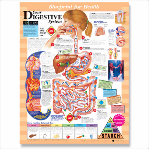 YOUR DIGESTIVE SYSTEM UNMOUNTED CHART