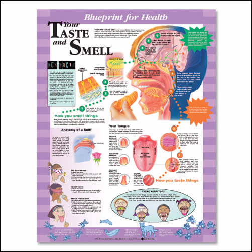 YOUR TASTE AND SMELL UNMOUNTED CHART
