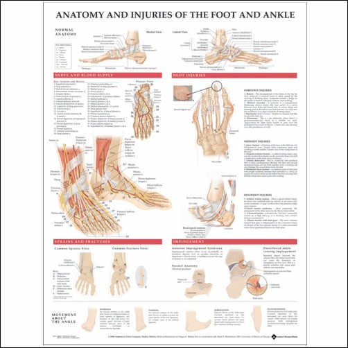 ANATOMY AND INJURIES OF THE FOOT AND ANKLE CHART - LAMINATED
