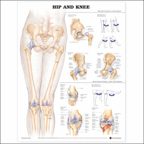 HIP AND KNEE LAMINATED CHART