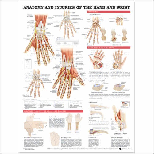 ANATOMY AND INJURIES OF THE HAND AND WRIST LAMINATED CHART