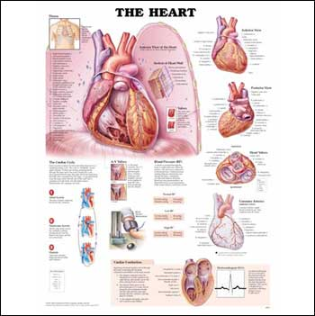 THE HEART STYRENE PLASTIC