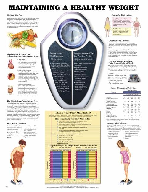 MAINTAINING A HEALTHY WEIGHT UNMOUNTED CHART