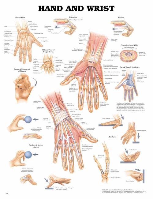 HAND AND WRIST UNMOUNTED CHART