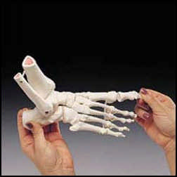 ELASTIC FOOT DEMONSTRATION MODEL - LEFT