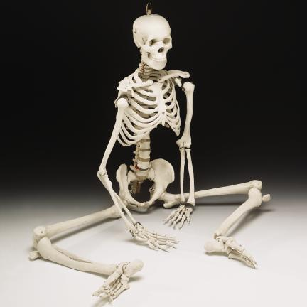 BUCKY SKELETON (4TH QUALITY)
