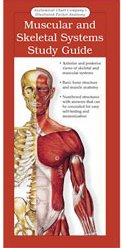 ILLUSTRATED POCKET ANATOMY - MUSCULAR AND SKELETAL SYSTEMS STUDY