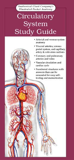 POCKET ANATOMY: CIRCULATORY SYSTEM STUDY GUIDE
