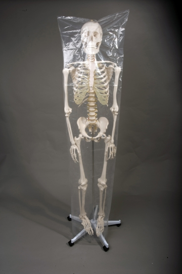 Deluxe Life-Size Human Skeleton