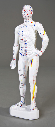 "11"" Male Acupuncture Model"