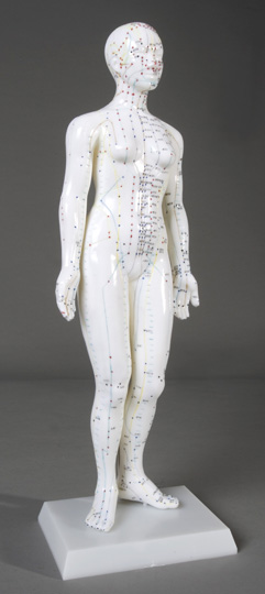 "19"" Female Acupuncture Model"