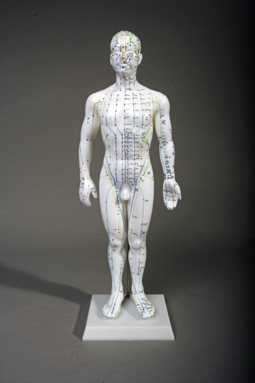 "20"" Male Acupuncture Model"