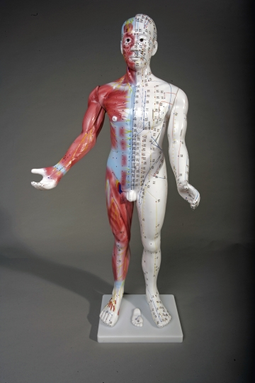 "34"" Deluxe Male Acupuncture Model"