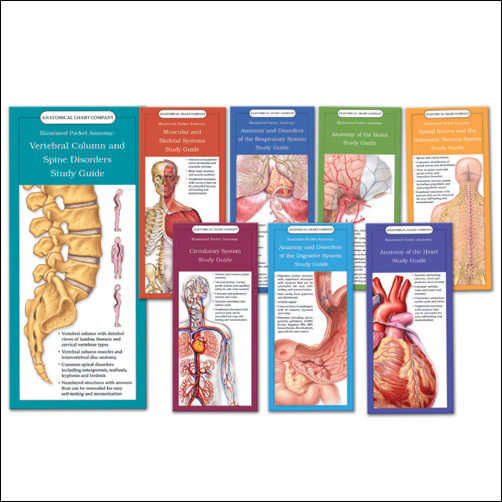 ILLUSTRATED POCKET ANATOMY - SET OF ALL 8 STUDY GUIDES